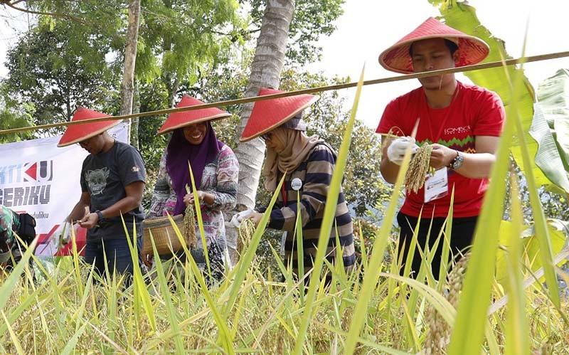 BBTMC usulkan adopsi teknologi modifikasi cuaca di sentra penghasil beras