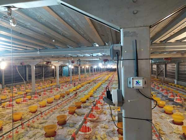 Solusi flexIoT XL Smart Poultry berhasil tingkatkan produksi unggas