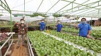 XL dukung Urban Farming dengan IoT