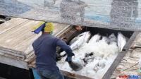 KKP digitalisasi sektor perikanan tangkap untuk genjot PNBP