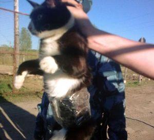 Kucing Selundupkan Ponsel ke Penjara